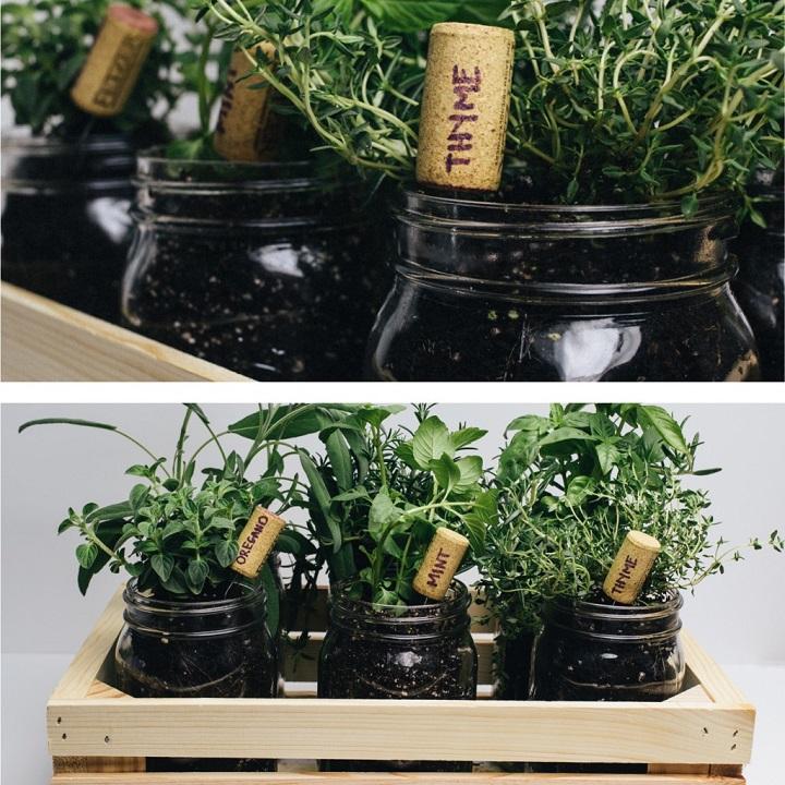 Frascos para ervas aromáticas