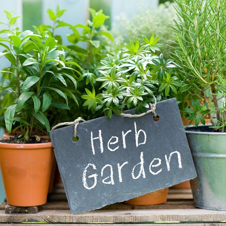 Ervas aromáticas em casa: a horta e a decoração