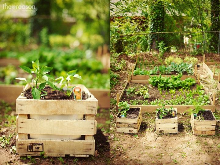 jardinagem diy
